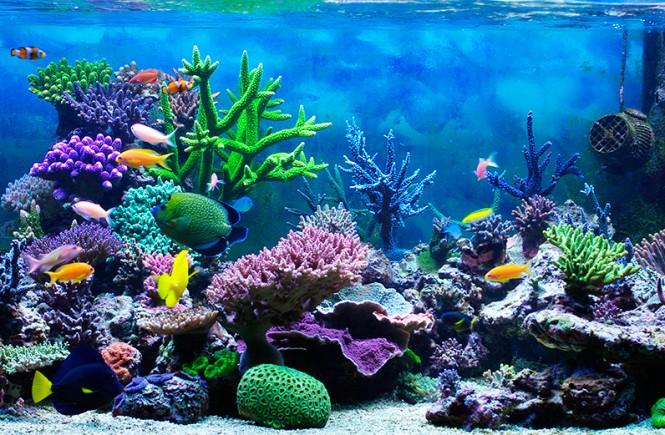 Hor scopo acuario hoy horoscopo diario todo sobre acuario for Horoscopo de hoy acuario