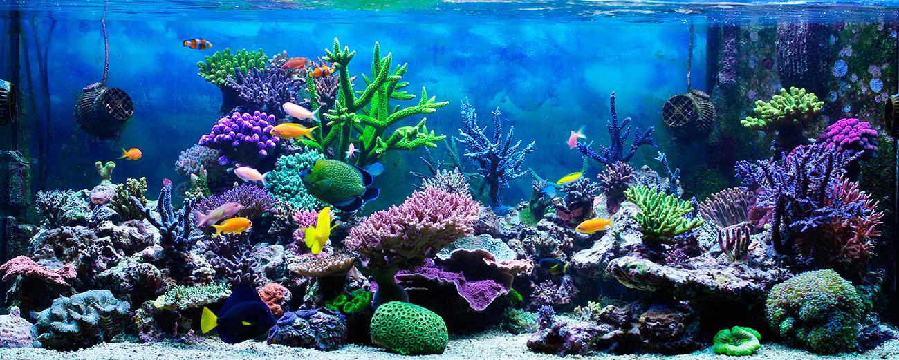 El maravilloso mundo de acuario for Peces de acuario marino
